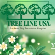 GP&L Recognized as Tree Line USA Utility for 11th Year